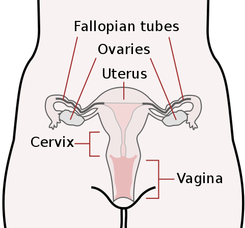 interpreting normal vaginal discharges